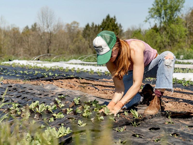 kleinteilige Landwirtschaft