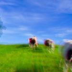 Auch der Biosektor muss sich weiterentwickeln