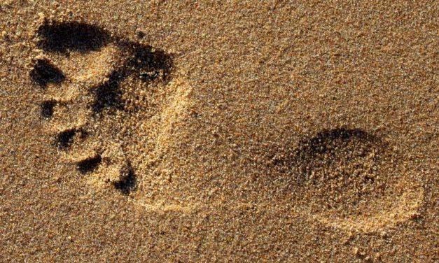 Kennen Sie den Kohlenstoff-Fußabdruck Ihrer Lebensmittel?