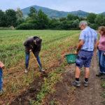 Pilotprojekt mit Bio-Gemüse