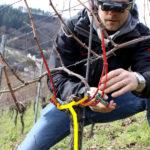 Rheinland-Pfalz: Ökolandbau stärken, Innovationen fördern