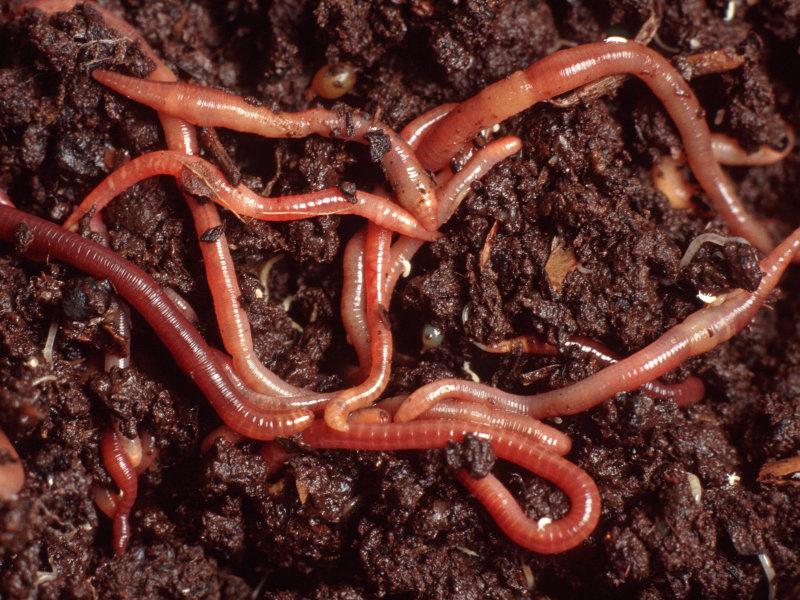 Bodenfruchtbarkeit